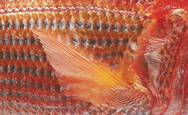 Fisch Wissen