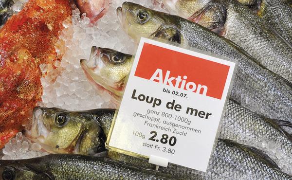 Fisch Aktionen