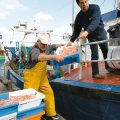 Fischfang Kontrolle