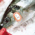 Fisch Kühlung