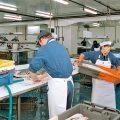 Fischhallen Processing