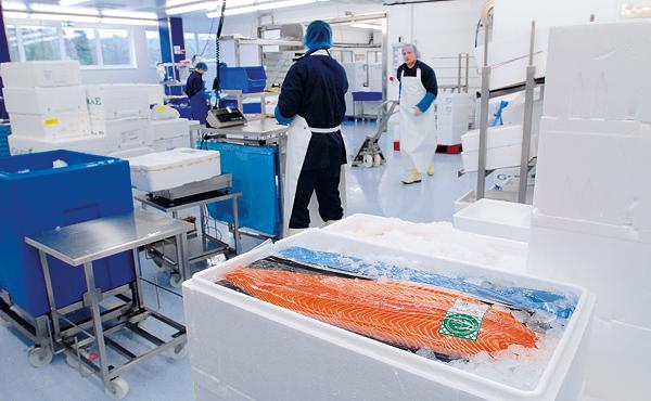 Fisch-Wissen Verantwortung