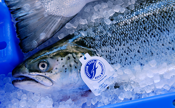 Fisch-Wissen Sicherheit