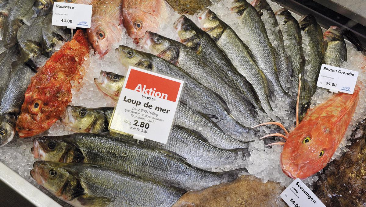 Fisch-Einkauf Fisch ganz