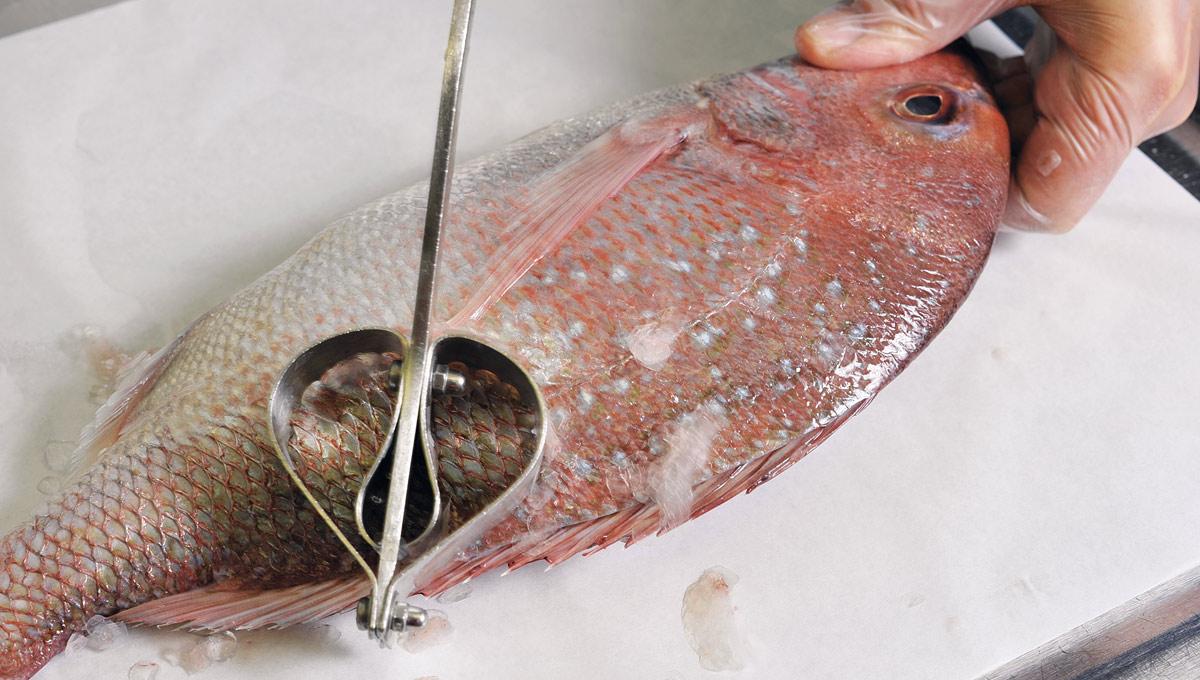 Fisch-Einkauf Abschuppen