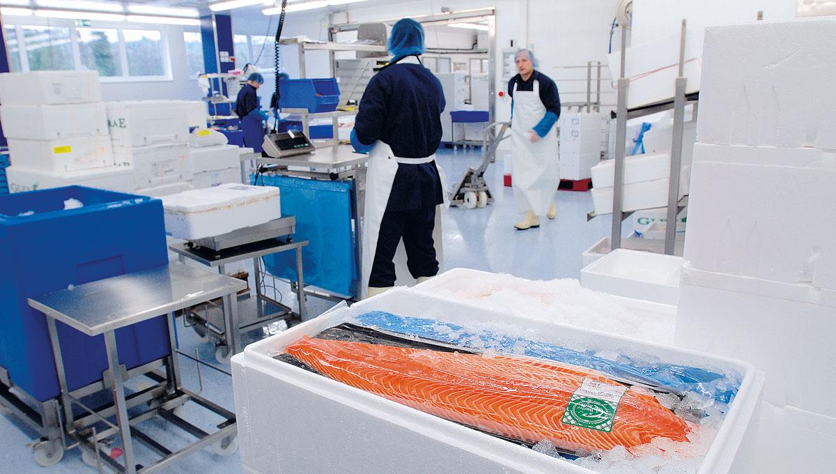 Fisch-Wissen Produktionshalle