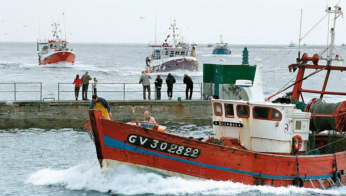 Fisch-Wissen Hafeneinfahrt