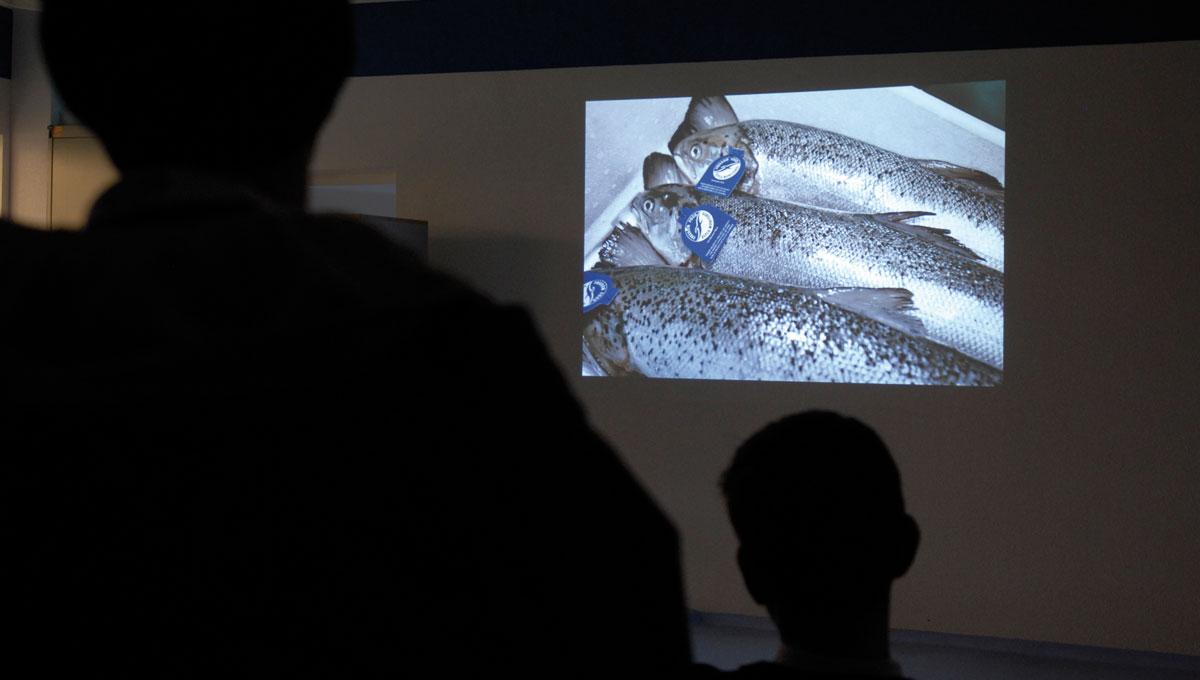 Fisch-Engros Fischfachkurs