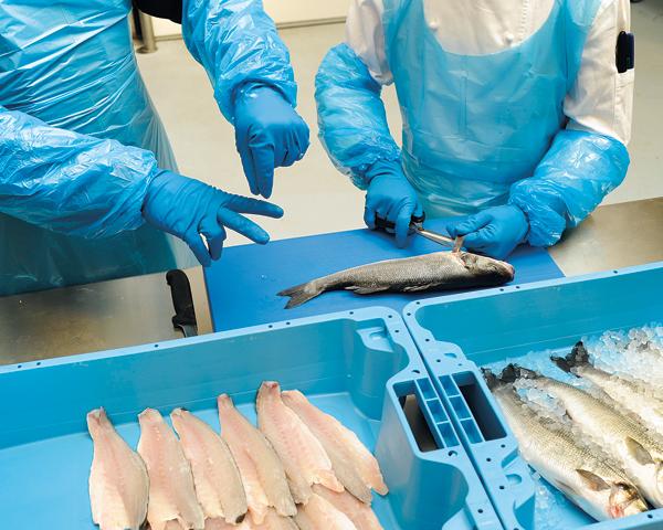Fischfachkurs Filetieren
