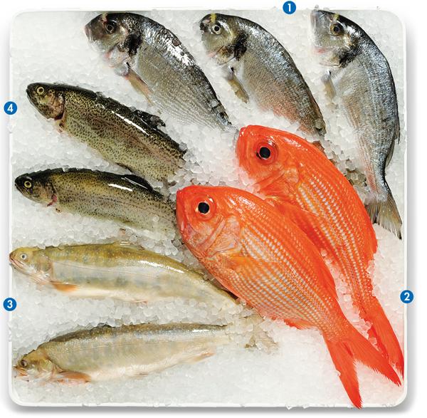 Vitrine Ganzer Fisch