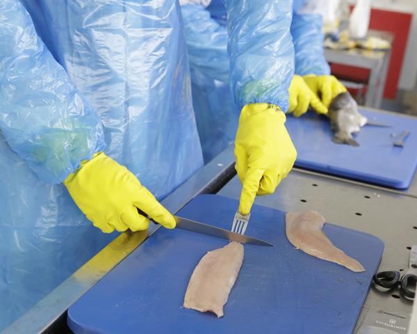 Filetierkurs Haut entfernen