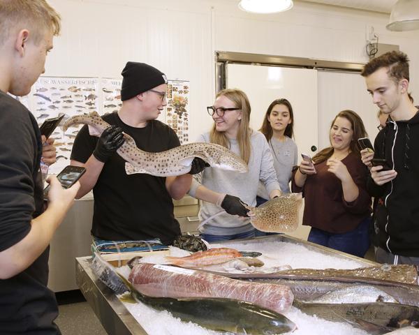 Fischseminar Fischvitrine