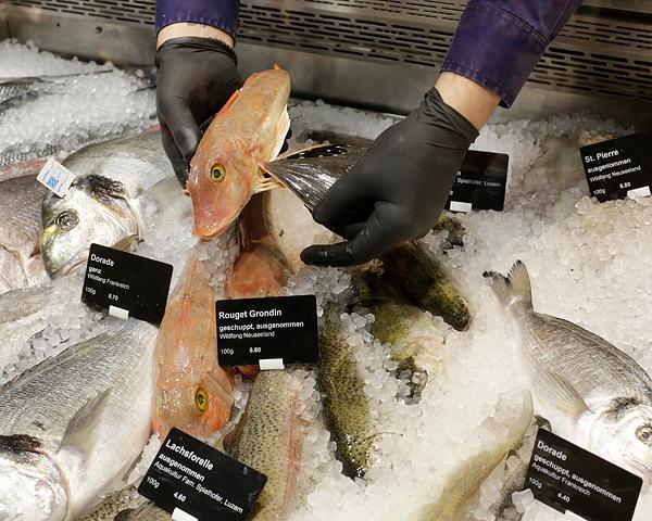 Fischvitrine im Jelmoli FOOD MARKET