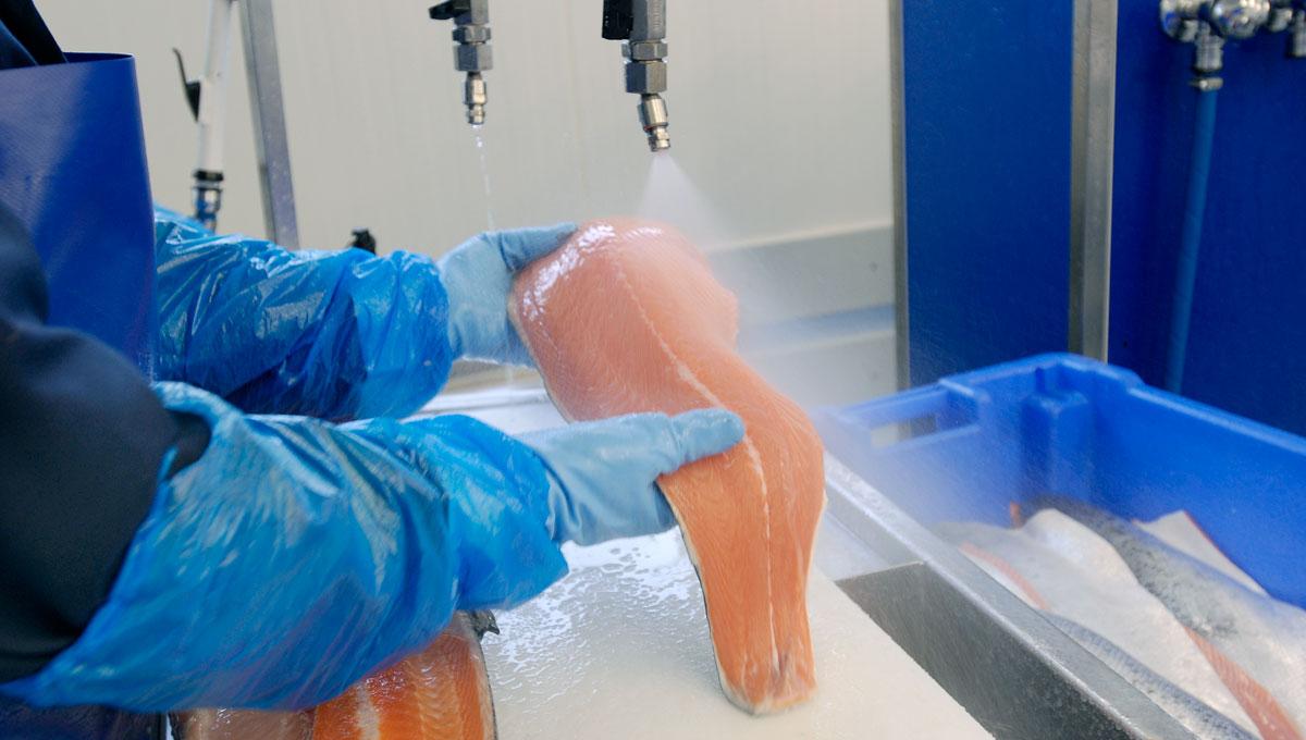 Fisch Filet waschen
