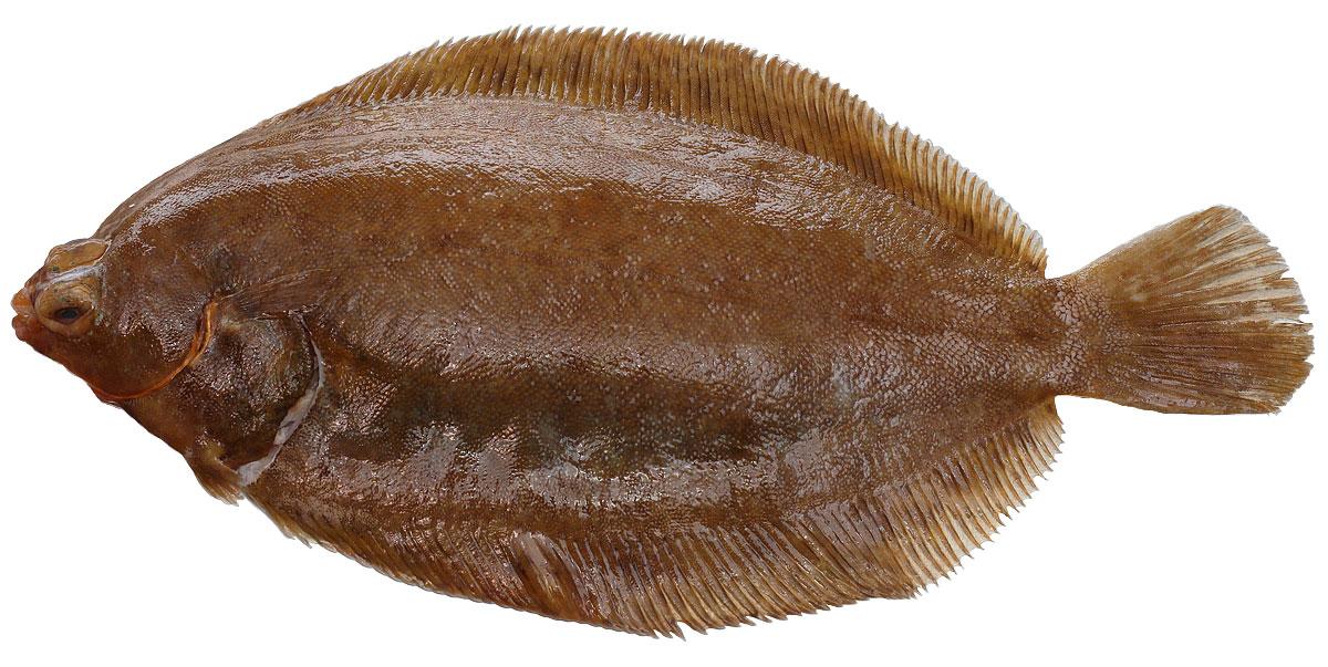 Rotzunge