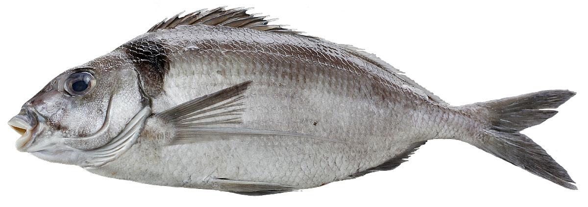 Tarakiri